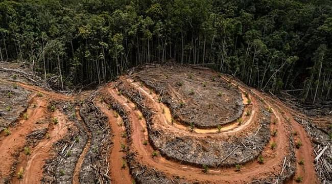 1 ağaçtan 8.300 A4 kağıt çıkıyor: AĞAÇ DİKELİM