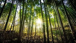 42 binden fazla ağacın kesilmesini önledi