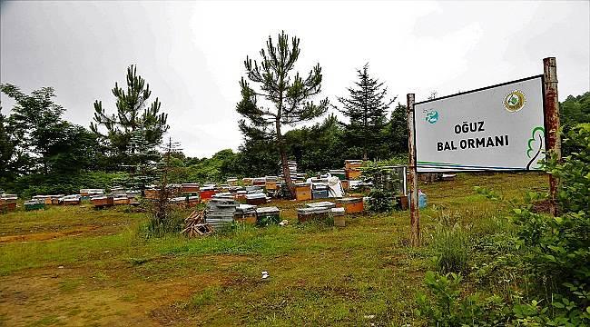 Orman Genel Müdürlüğü '20 Mayıs Dünya Bal Günü' açıklaması...