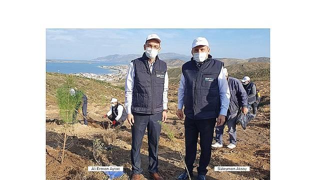 Limak Enerji: Balıkesir'in Avşa Adası'nda 1000 fidanlık orman ...