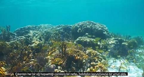 İşte Marmara Denizi Mercanları! AYRINTILAR