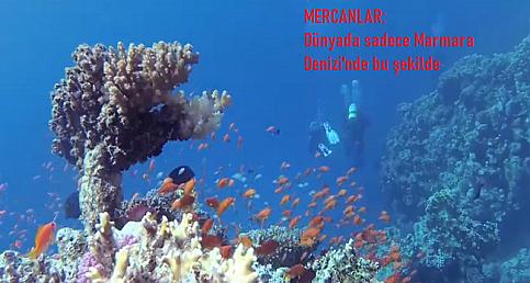 İşte Marmara Denizi'nin altı: Su altı yaşam ve biyoçeşitlilik için birleştiler