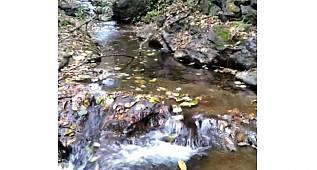 Doğa'nın güzellikleri - SU'yun sesi...